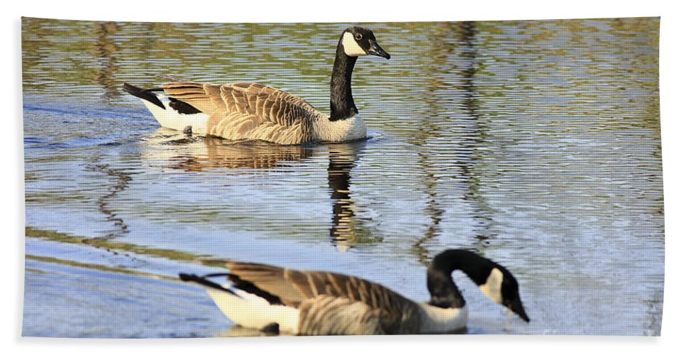 Geese Bath Sheet featuring the photograph Evening Light On Nature by Deborah Benoit