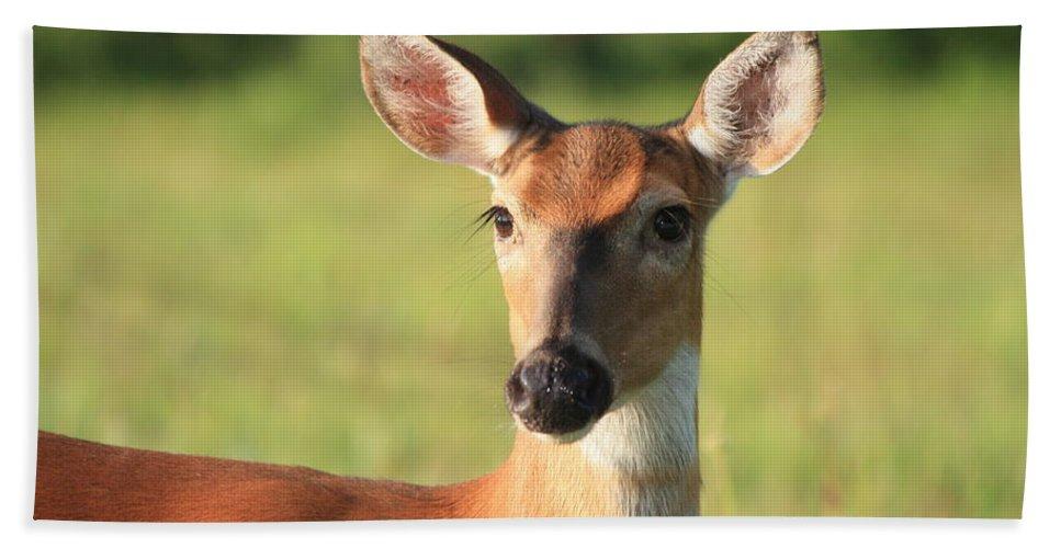 Deer Bath Sheet featuring the photograph Ever Watchful by Nunweiler Photography