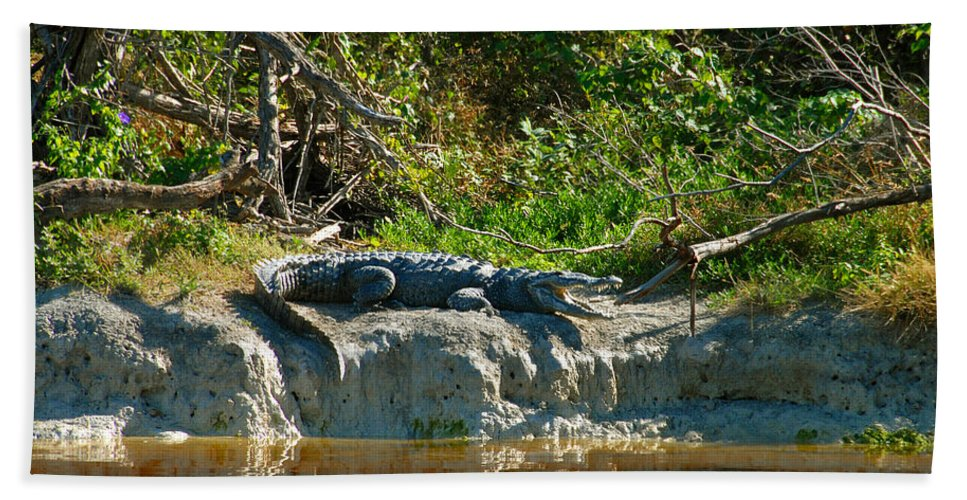 Everglades National Park Hand Towel featuring the photograph Everglades Crocodile by David Lee Thompson