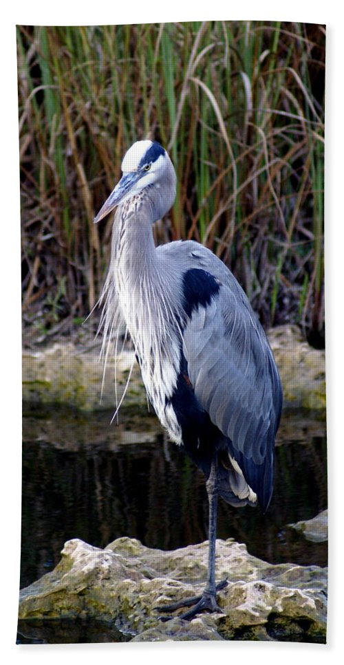 Everglades Hand Towel featuring the photograph Everglades Heron by Marty Koch
