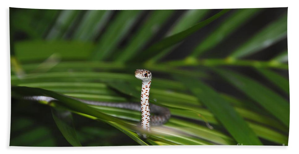 Everglades Racer Hand Towel featuring the photograph Everglades Racer by David Lee Thompson