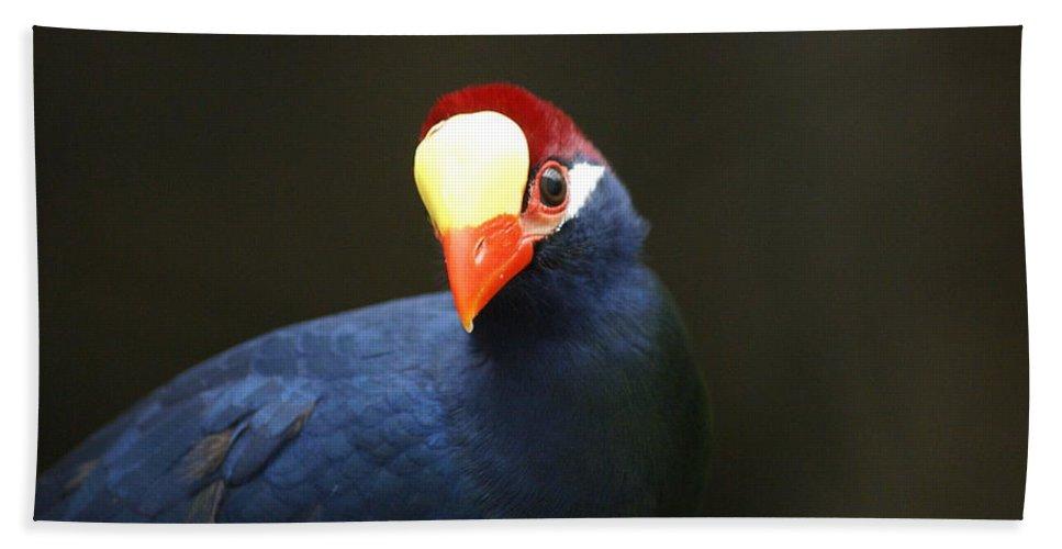 Zoo Bath Sheet featuring the photograph Exotic Bird by Heidi Poulin