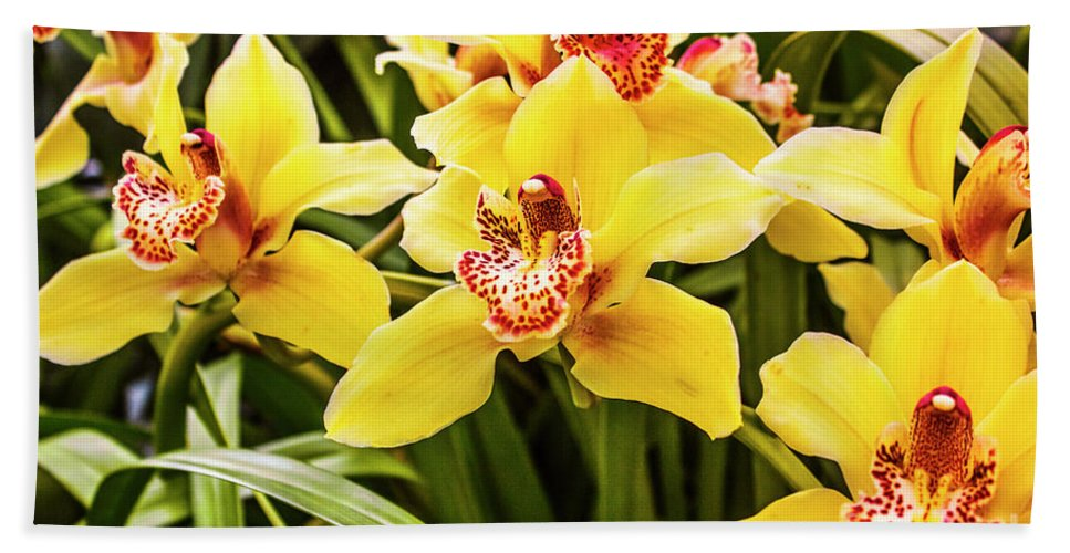 Flora Bath Towel featuring the photograph Exotic Orchids by Jorgo Photography - Wall Art Gallery