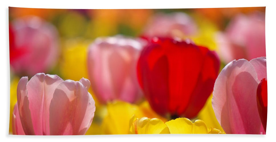 Tulips Hand Towel featuring the photograph Explosion Of Colors by Angela Doelling AD DESIGN Photo and PhotoArt