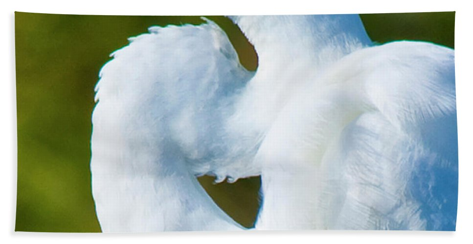 Great White Egret Bath Sheet featuring the photograph Eye-catching by Betsy Knapp