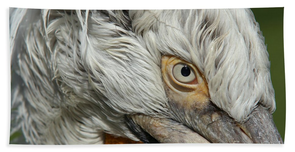 Dalmatian Pelican Bath Sheet featuring the photograph Eye by Michal Boubin