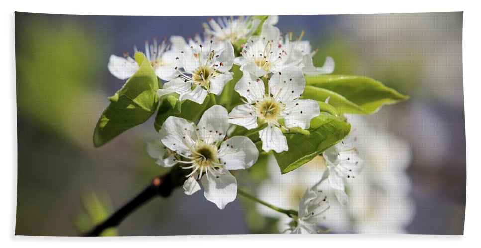 Hawthorn Bath Sheet featuring the photograph Eye Of The Beholder by Theresa Campbell