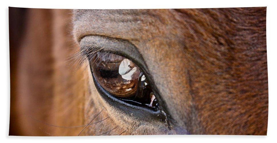 Horse Bath Sheet featuring the photograph Eye See You Too by Hannah Breidenbach