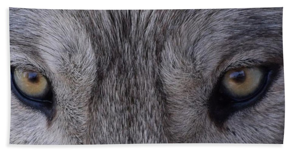Wolf Bath Sheet featuring the photograph Eyes Of A Wolf by LKB Art and Photography