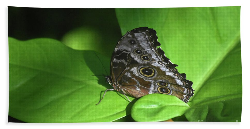Blue-morpho Bath Sheet featuring the photograph Eyespots On The Closed Wings Of A Blue Morpho Butterfly by DejaVu Designs