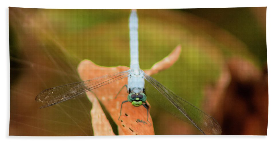 Dragonfly Hand Towel featuring the photograph Face Of The Dragon by Karl Ford