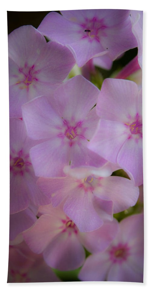 Phlox Bath Towel featuring the photograph Fairy Tale Phlox by Teresa Mucha