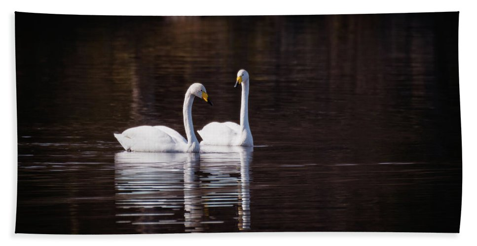 Swan Bath Sheet featuring the photograph Faithfulness by Ari Salmela