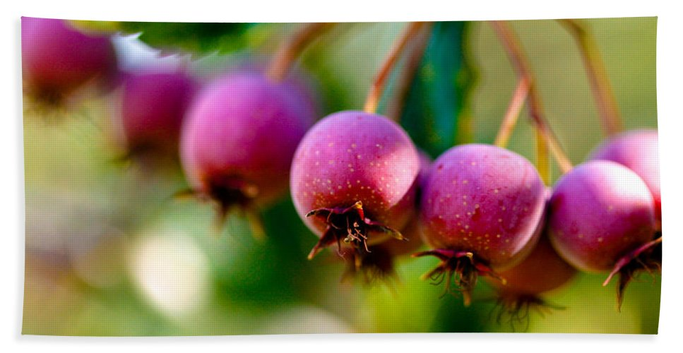 Berry Bath Sheet featuring the photograph Fall Berries by Marilyn Hunt