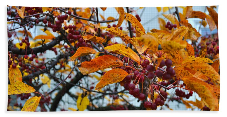 Berries Hand Towel featuring the photograph Fall Berries by Tim Nyberg