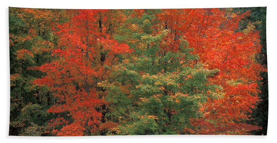 Door County Bath Sheet featuring the photograph Fall Brilliance by Sandra Bronstein