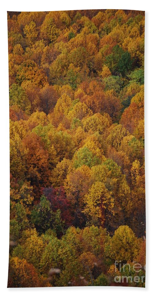 Fall Hand Towel featuring the photograph Fall Cluster by Eric Liller