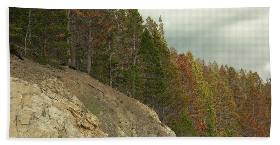 Trees Bath Sheet featuring the photograph Fall Color Evergreens by Sara Stevenson