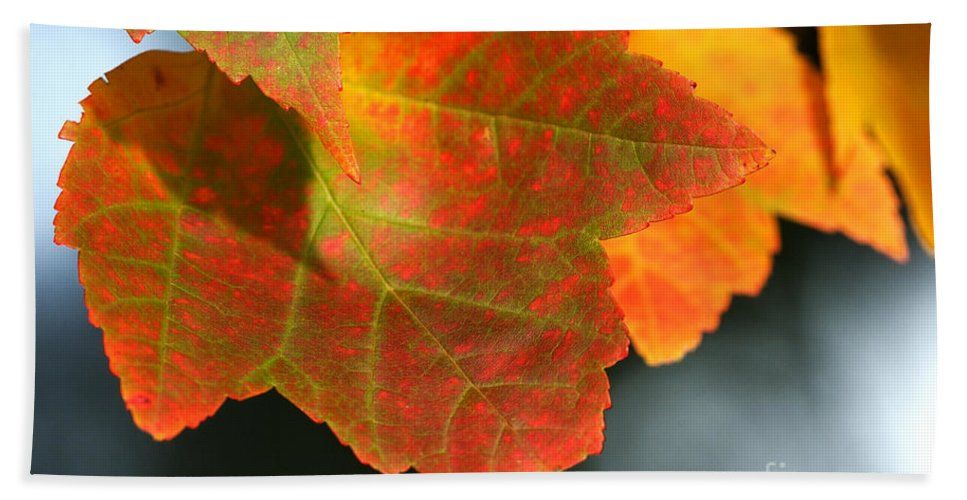 Fall Hand Towel featuring the photograph Fall Color by Sharon Talson