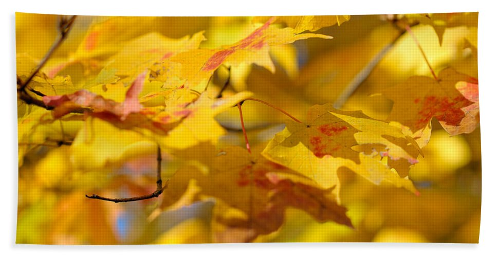 Nature Hand Towel featuring the photograph Fall Colors by Sebastian Musial