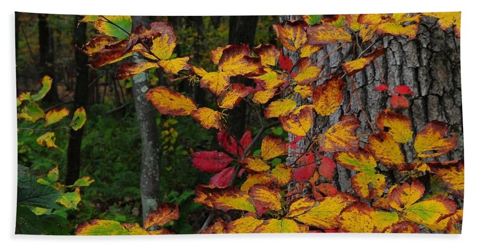 Fall Bath Sheet featuring the photograph Fall Decorating by JAMART Photography