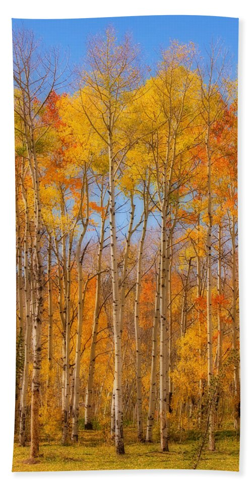 Trees Bath Sheet featuring the photograph Fall Foliage Color Vertical Image Orton by James BO Insogna