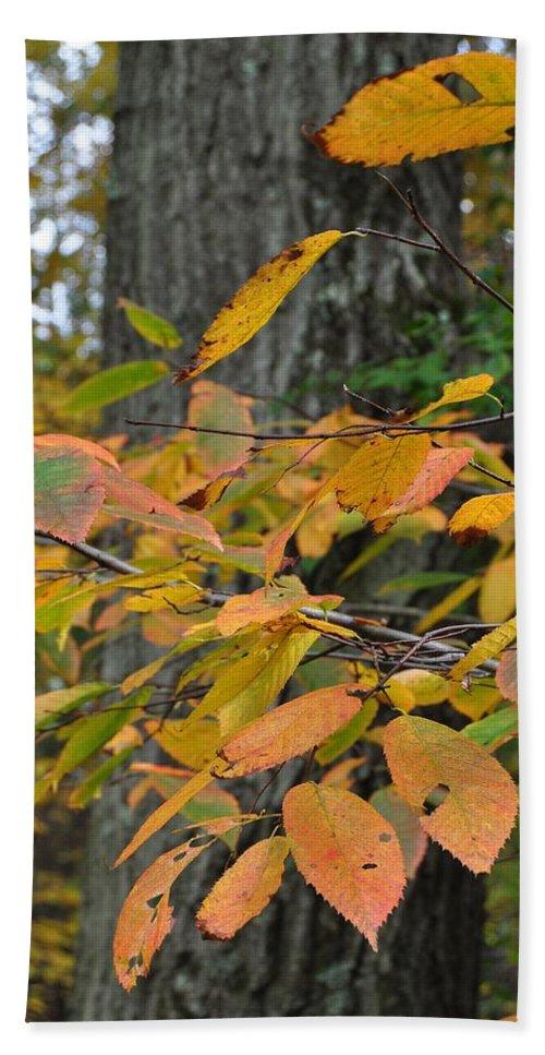 Fall Bath Sheet featuring the photograph Fall Foliage by JAMART Photography