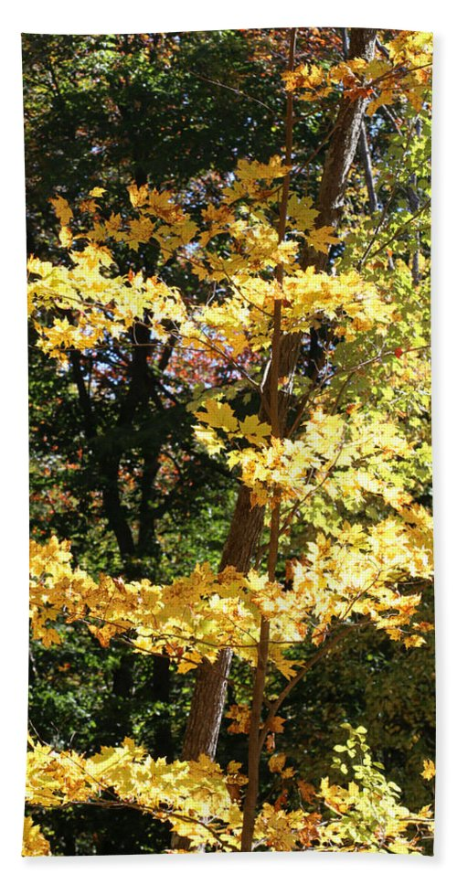 Fall Hand Towel featuring the photograph Fall Forest 3 by William Selander