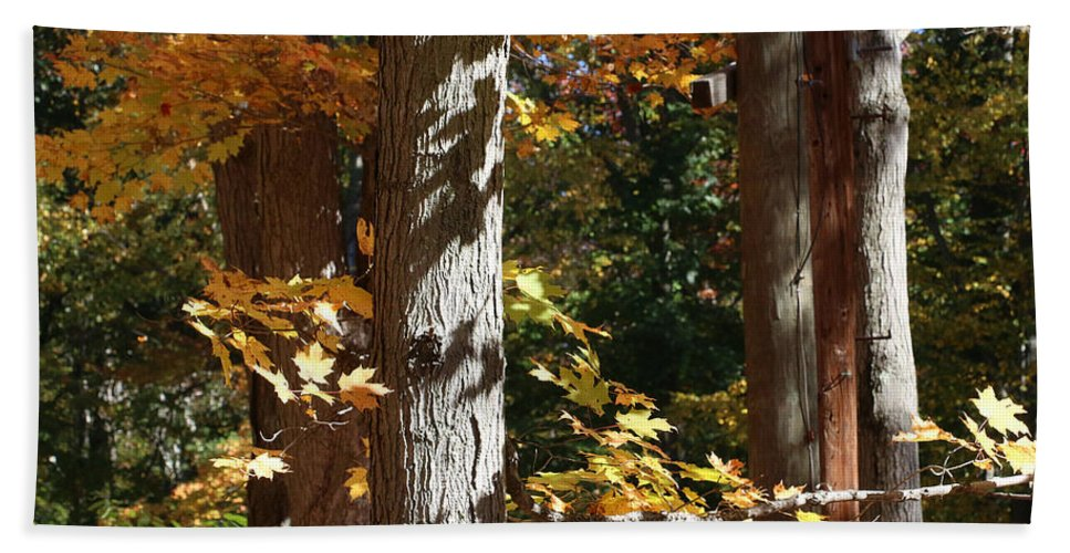 Fall Hand Towel featuring the photograph Fall Forest 4 by William Selander