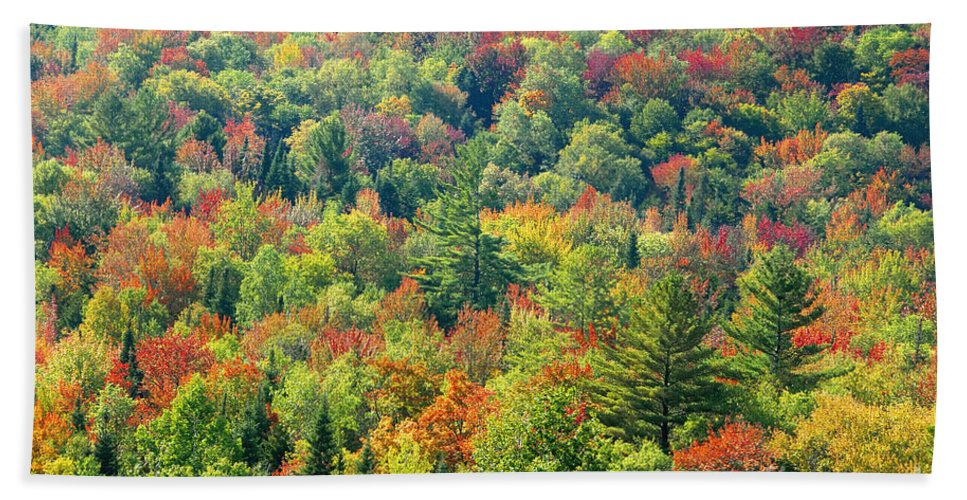 Adirondack Mountains Hand Towel featuring the photograph Fall Forest by David Lee Thompson