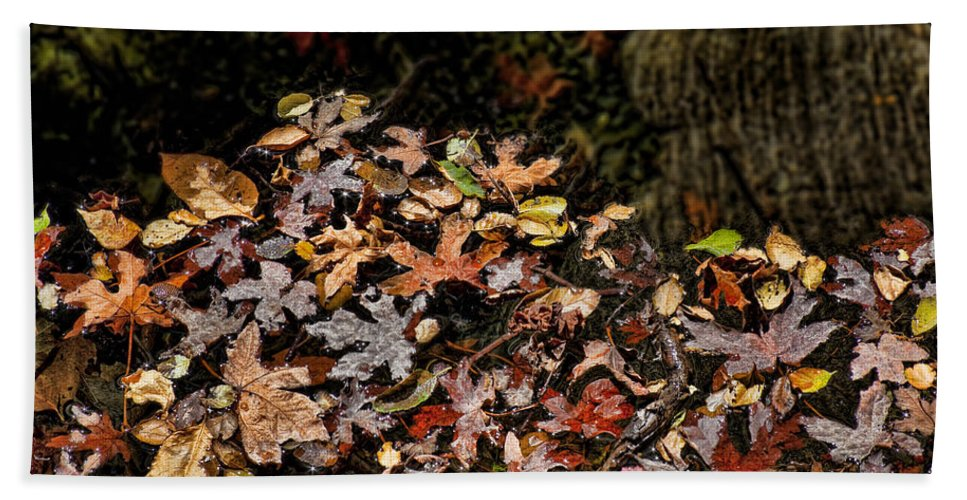 Maple Leaves Bath Sheet featuring the photograph Fall In August by Kelley King