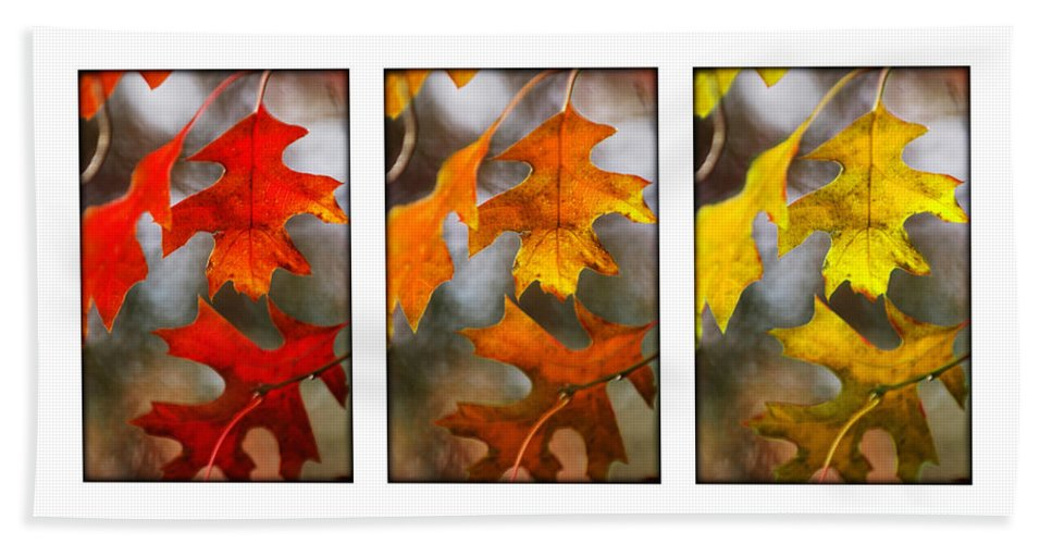Leaves Hand Towel featuring the photograph Fall Leaves by Jill Reger