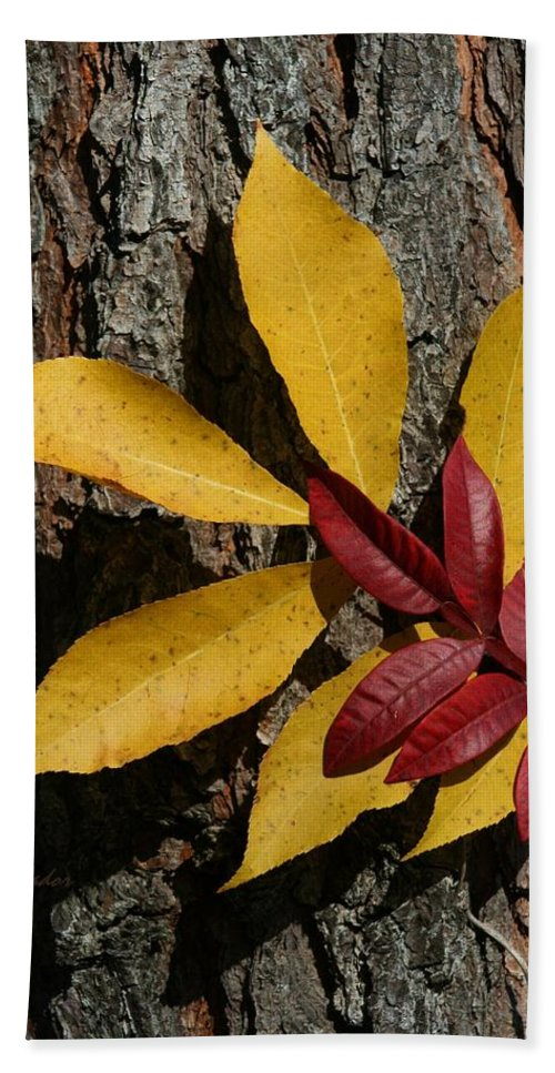 Fall Hand Towel featuring the photograph Fall Leaves by Tina Meador