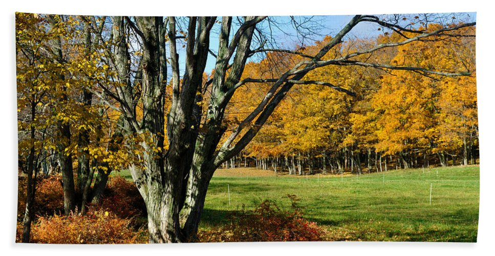 Trees Bath Towel featuring the photograph Fall Pasture by Tim Nyberg