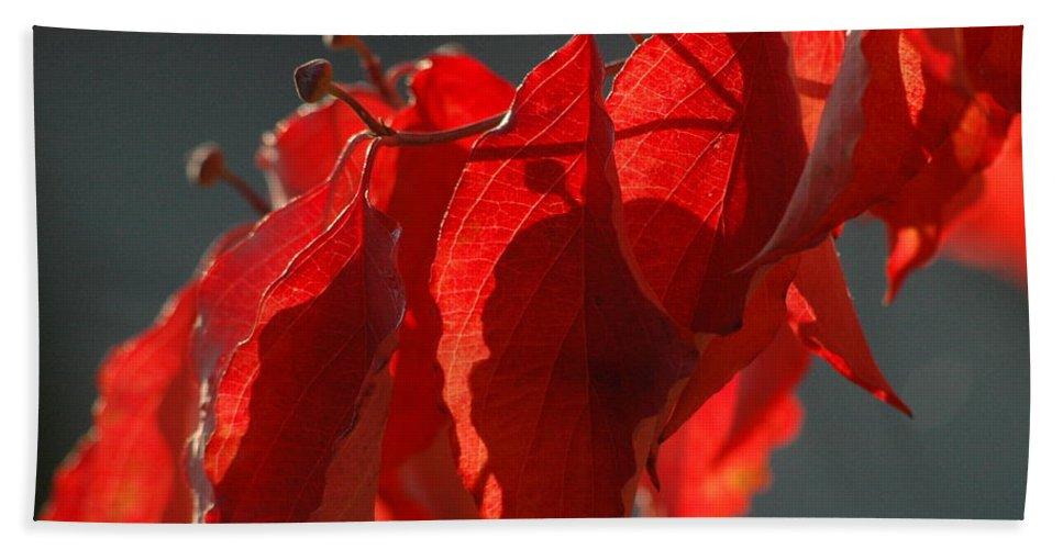 Landscape Bath Sheet featuring the photograph Fall Reds by Trish Hale
