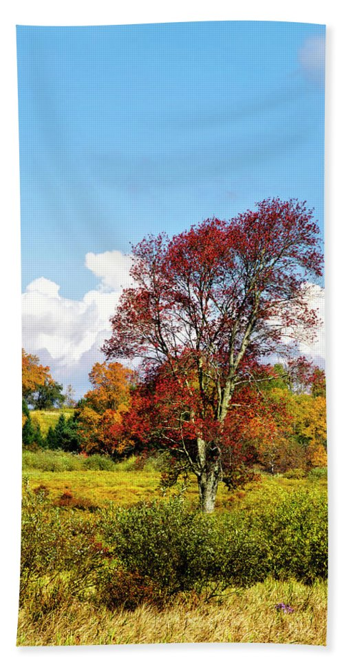 Fall Trees Bath Sheet featuring the photograph Fall Trees In Country Field by Christina Rollo