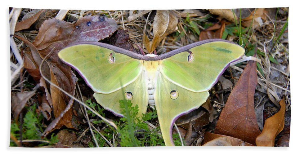 Moth Hand Towel featuring the photograph Fallen Angel by David Lee Thompson