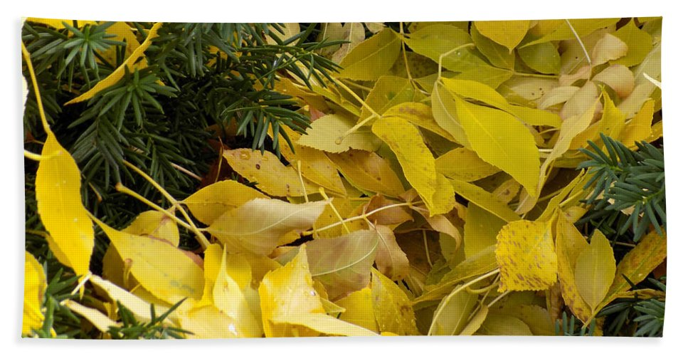 Leaves Hand Towel featuring the photograph Fallen In The Evergreen by William Tasker