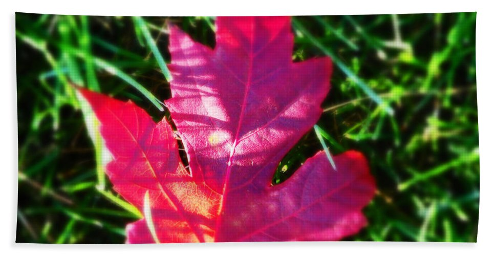 Nature Bath Sheet featuring the photograph Fallen Maple Leaf by Don Baker