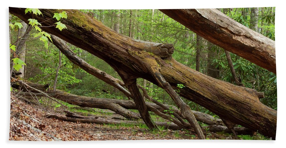 Great Smoky Mountains National Park Bath Sheet featuring the photograph Fallen Trees by Bob Phillips