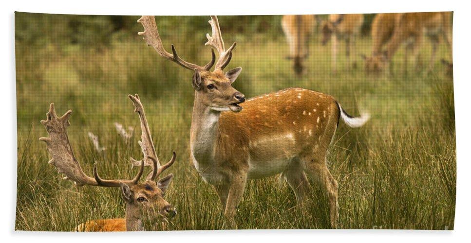 Fallow Deer Hand Towel featuring the photograph Fallow Deer by Angel Ciesniarska