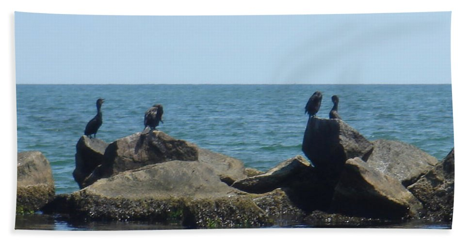 Birds Hand Towel featuring the photograph Falmouth by Donna Walsh