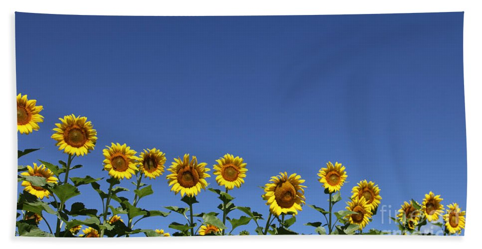 Sunflowers Bath Towel featuring the photograph Family Time by Amanda Barcon