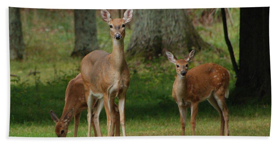 Deer Bath Sheet featuring the photograph Family Walk by Grace Grogan