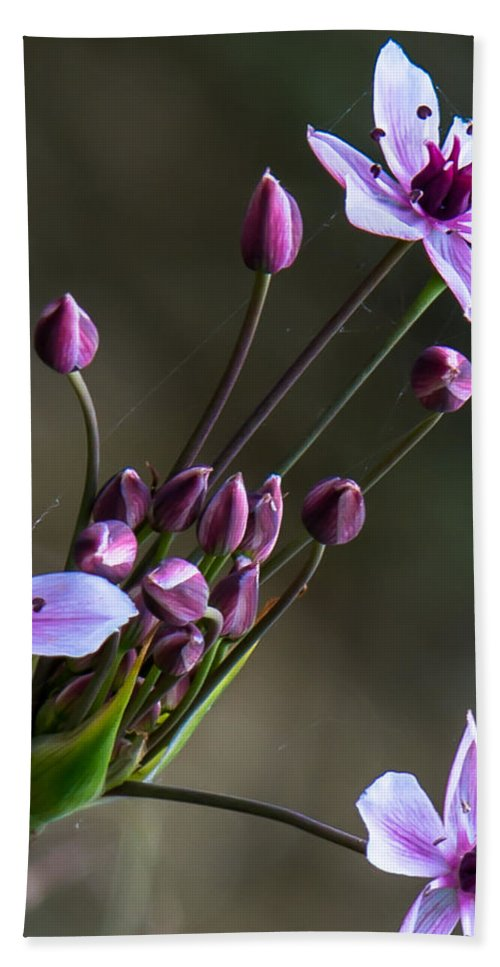 Wildflowers Hand Towel featuring the photograph Far From The Usual by Kristin Hunt