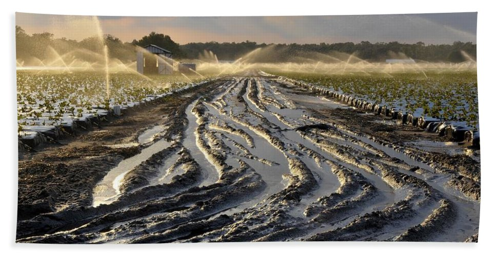 Farming Hand Towel featuring the photograph Farming Strawberries by David Lee Thompson