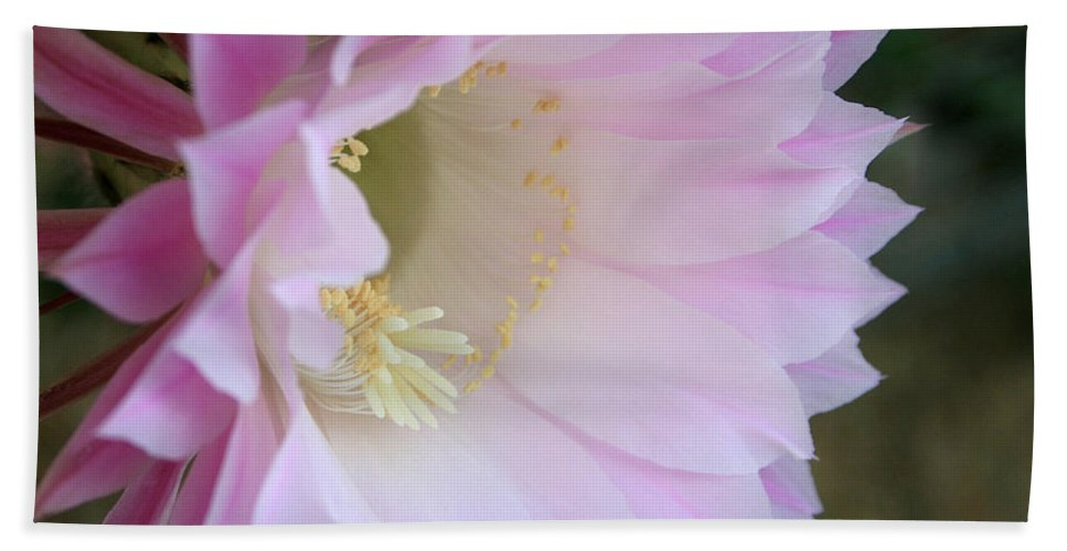 Bloom Bath Sheet featuring the photograph Fathers Day Cactus by Marna Edwards Flavell