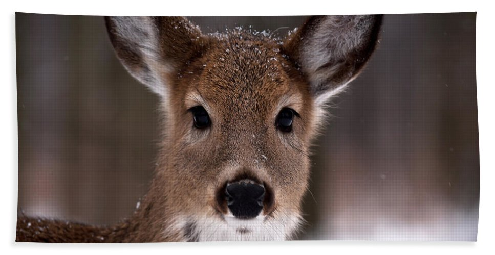 Deer Bath Sheet featuring the photograph Fawn by Cale Best