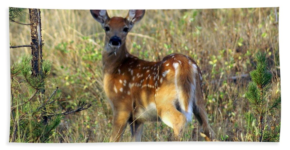 Deer Bath Sheet featuring the photograph Fawn by Marty Koch
