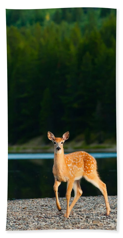 2006 Bath Towel featuring the photograph Fawn by Sebastian Musial